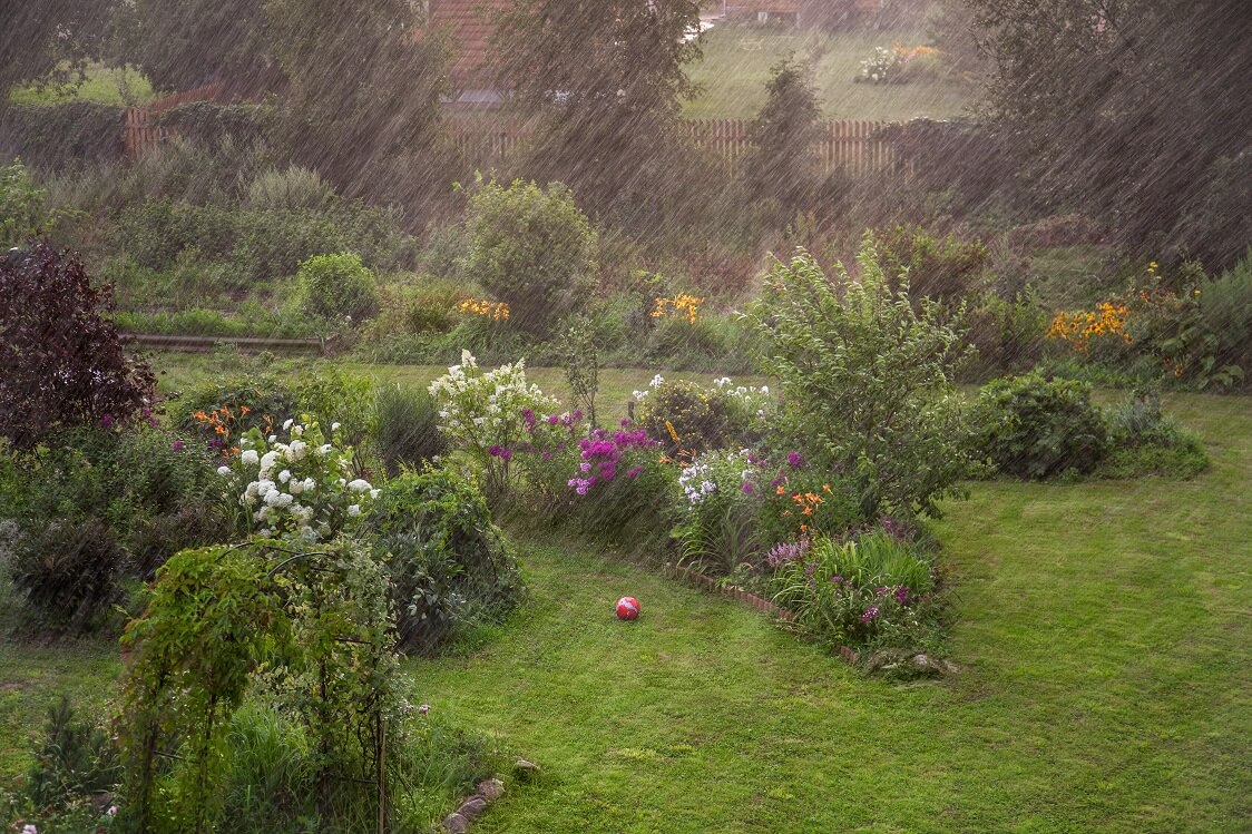 Heavy Rain in Garden